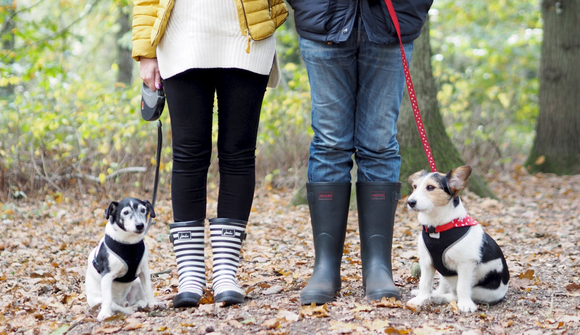 wellies and dog walks jack russells