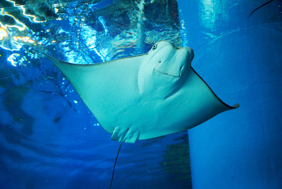 Aqua Park Aquarium Shinagawa Tokyo