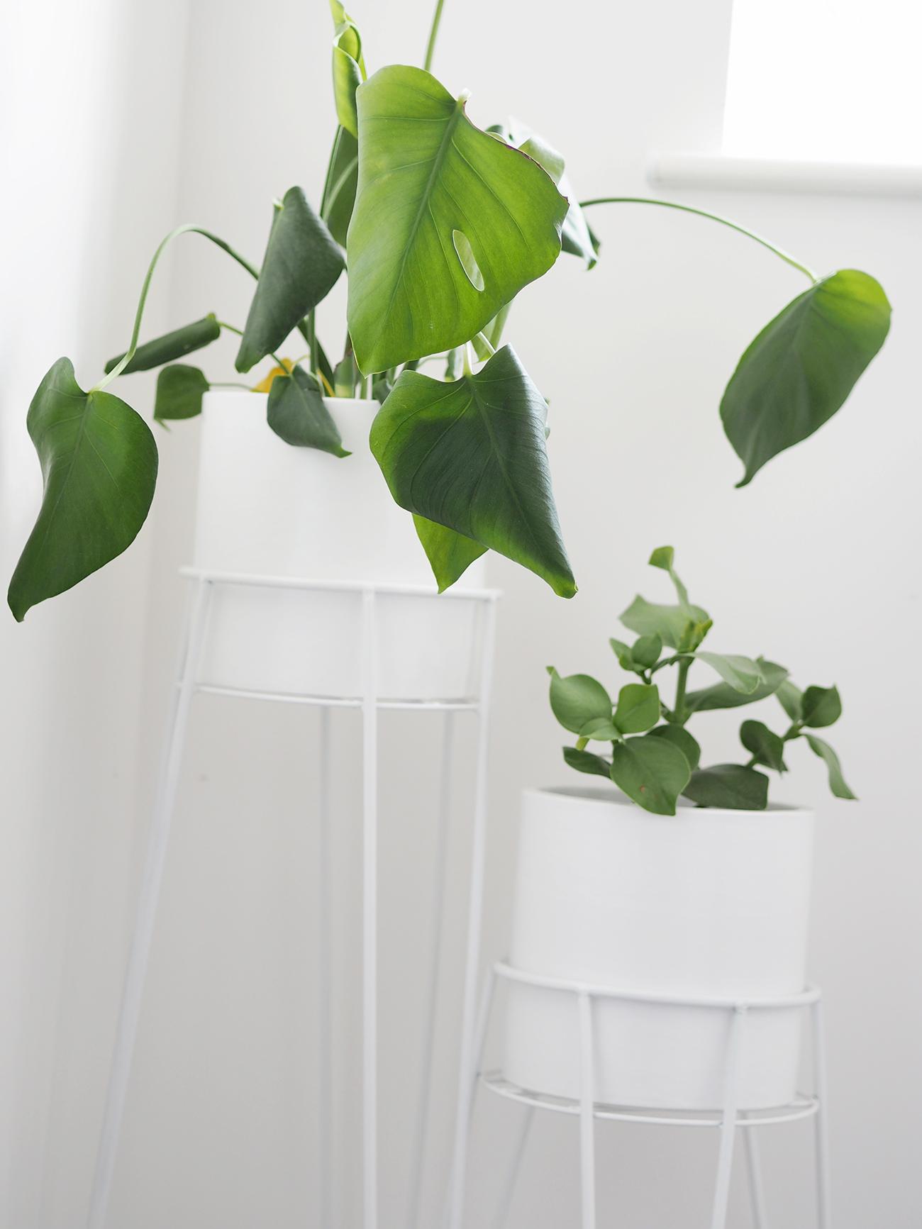 white indoor planters next
