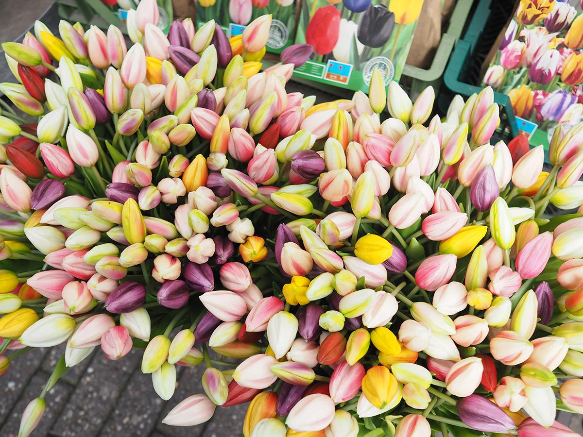 amsterdam tulip flower market