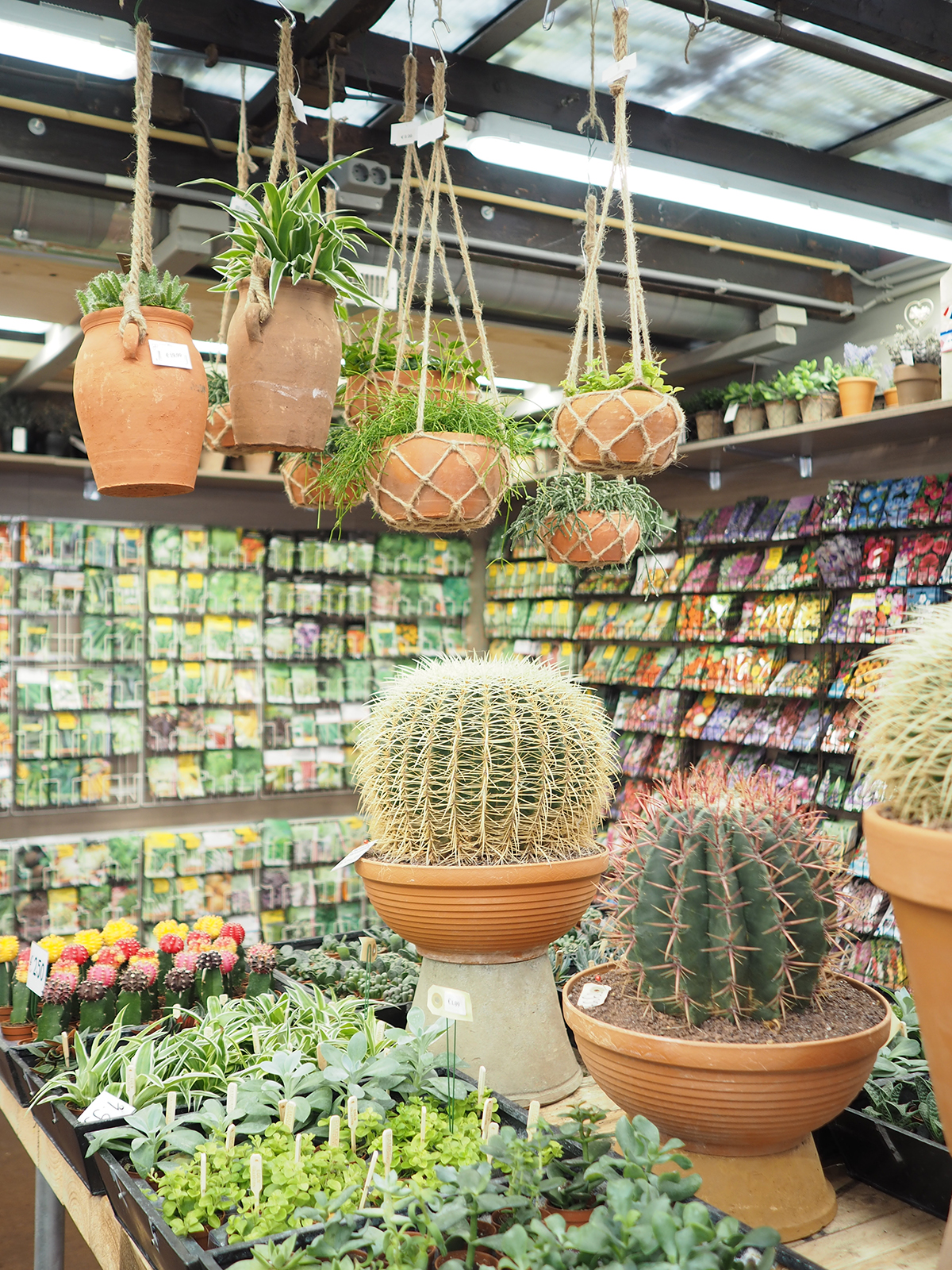Amsterdam flower market cactus and plant shop