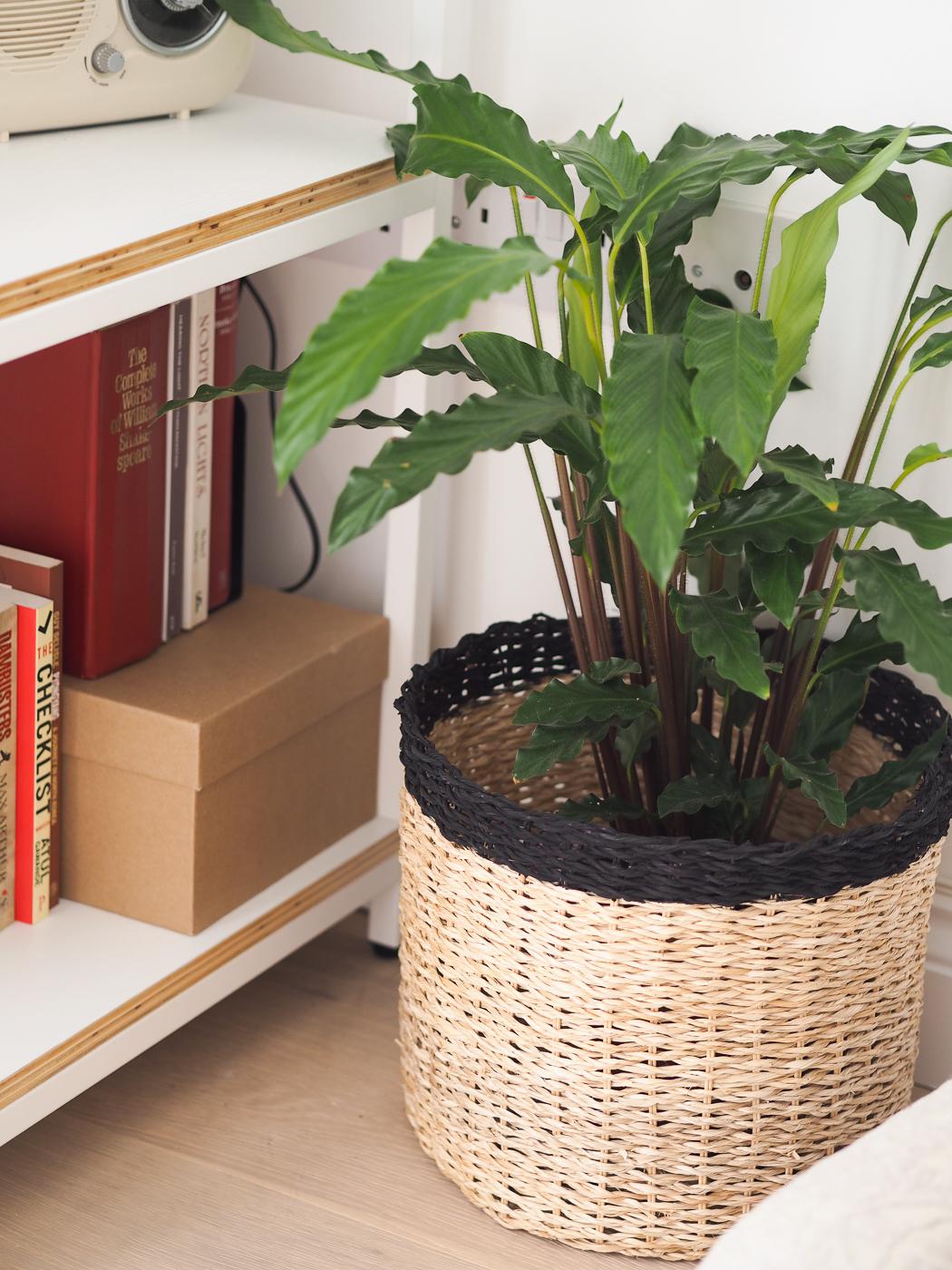 plants in basket